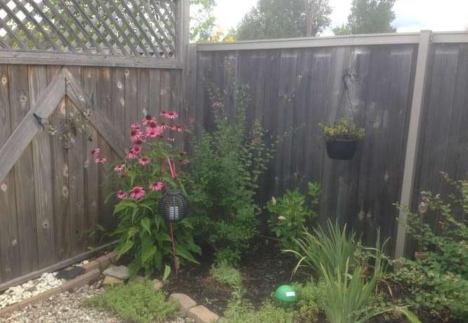 234 Bulrush Cres-small-032-36-Summer Backyard-666x500-72dpi